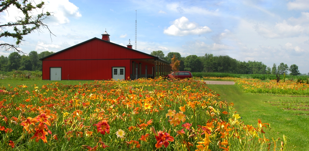 The Barn in full bloom, Mid July, 2015